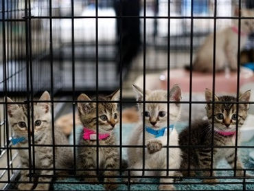 flyer image Caged Kittens.jpg