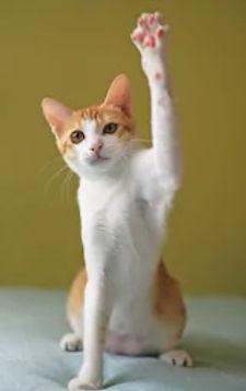 cat raise hand.jpg
