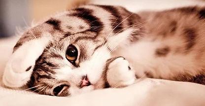 flyer image Cute Kitten.jpg