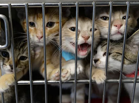 flyer image Caged Kittens II.jpg