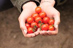 Tomatenherz.jpg