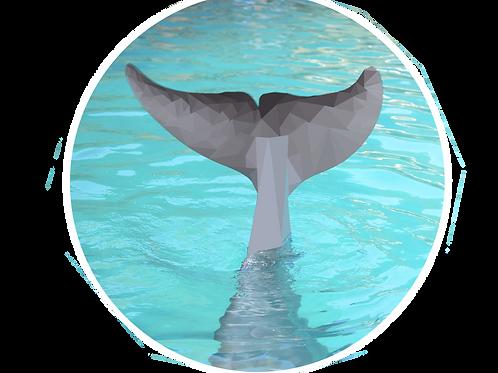 Dolphin Fluke Friend Sticker