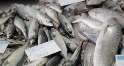 Local products - fish