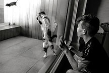 boy watching a cat catch a mouse through a window