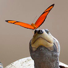Butterflies Drink the Tears of Turtles