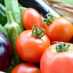 「7月定期便 王様の野菜⁈ネバネバ野菜をお届けします」__7月も半ばに差し掛かる