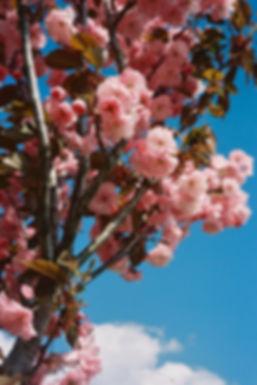 1_Spring2019_LuciaGaspari.jpeg