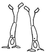 ekstra_på hænder-crop-u3961.jpg