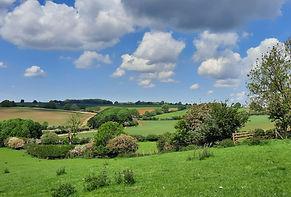 Hedges 2 crop.jpg
