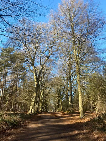 Harlestone Firs open access page for web