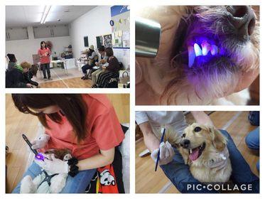 愛犬歯磨き特別講座   2020.12.02 (水) 13:00~     参加費5,000円