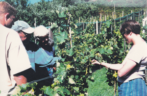 A high-contrast photograph of visitors looking at the vines on a sunny August day