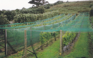 Green netting stretched above tall posts covering short lines of vines which stretch up a hillside