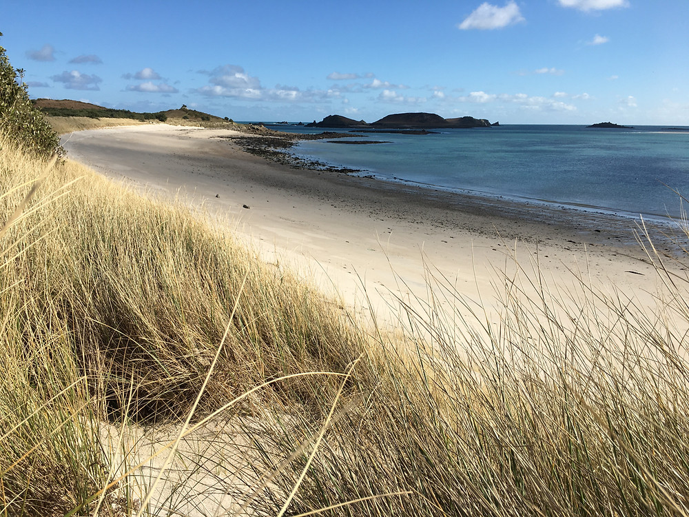 A long expanse of beach with sea lapping at the shore - taken from the dunes with marram grass close to the camera