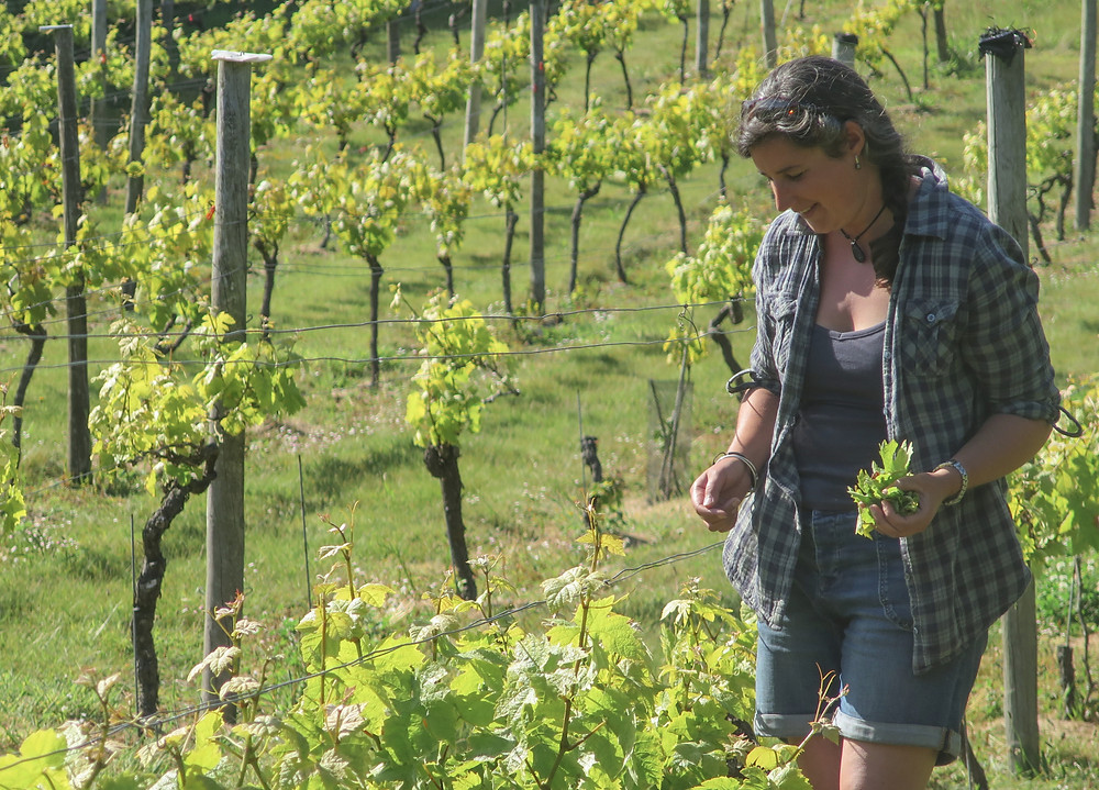 A woman in a blue chequed shirt walking between grape vines on a sunny day