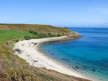 A sandy bay with blue sea and sk and a headland dotted with yellow gorse flowers in the background