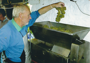 A man in a blue shirt holding grapes over a stainless steel hopper about to drop them in