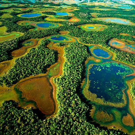 Pantanal: Brasil Selvagem