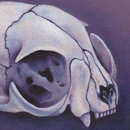 Cat Skull II