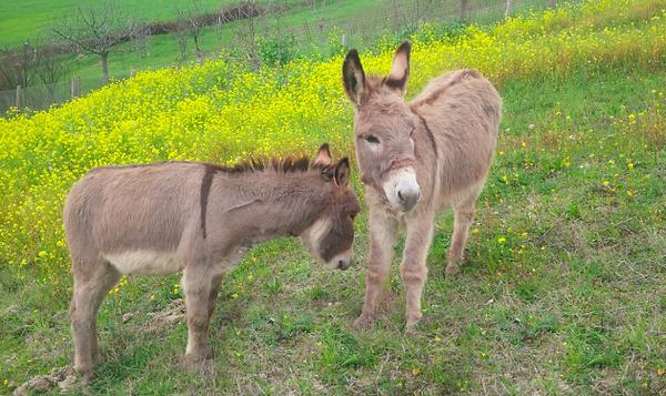 Animals-ortofficina.png