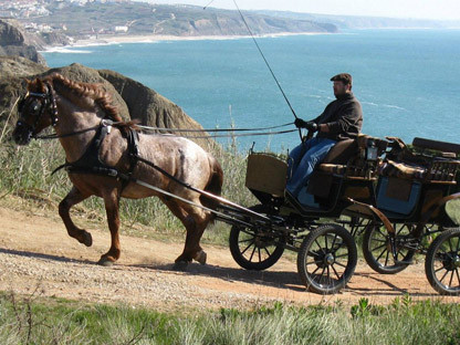 HORSE AND CARRIAGE TOURS RIDES