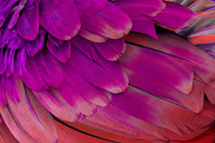 Be Bold Pink Feathers.jpg