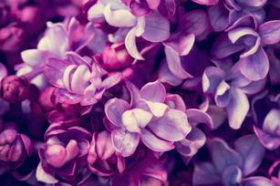 Be Bold Ultra Violet Flowers.jpg