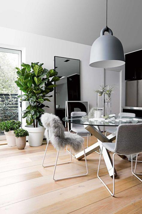Decoração com plantas na sala