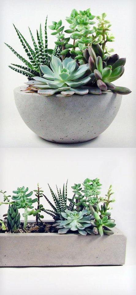 Planta suculenta para decorar apartamento