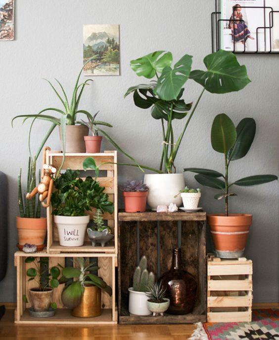 Planta decoração rustica