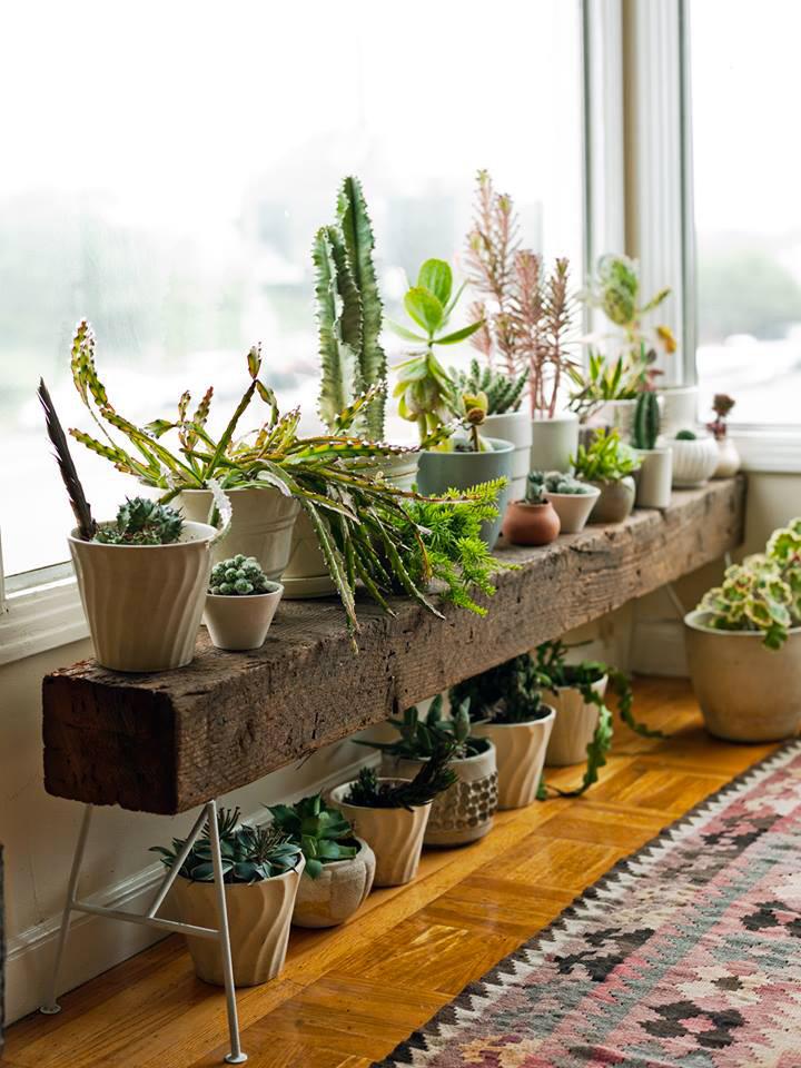Plantas suculentas para decoração