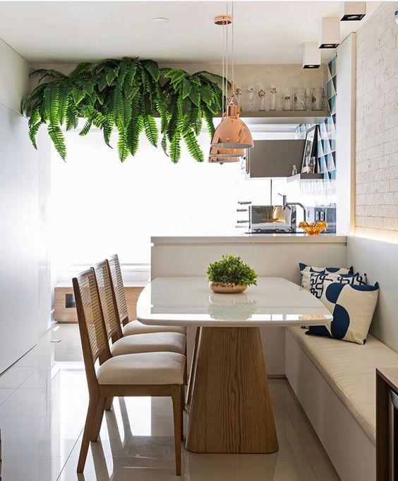 Samambaia para decorar interior de apartamento