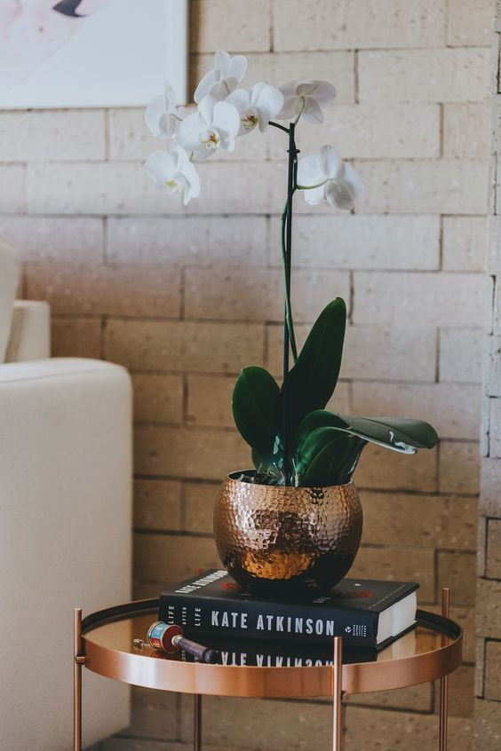 Orquidea para decorar interior
