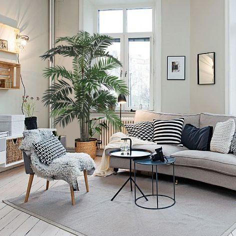 Planta para decora sala