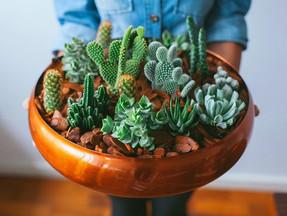 Como Decorar com Plantas Dentro de Casa