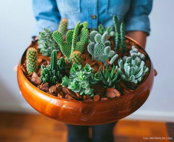 Plantas para decora dentro de casa