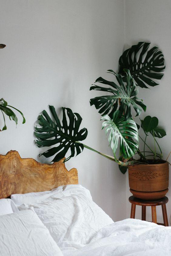 Planta para decorar quarto