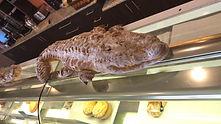 Bread-Ard-Alligator.jpg
