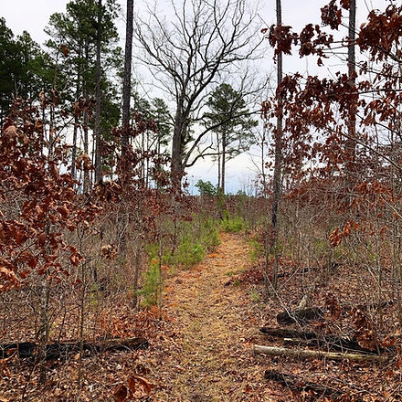 Victory Section of the Ozark Trail.jpg