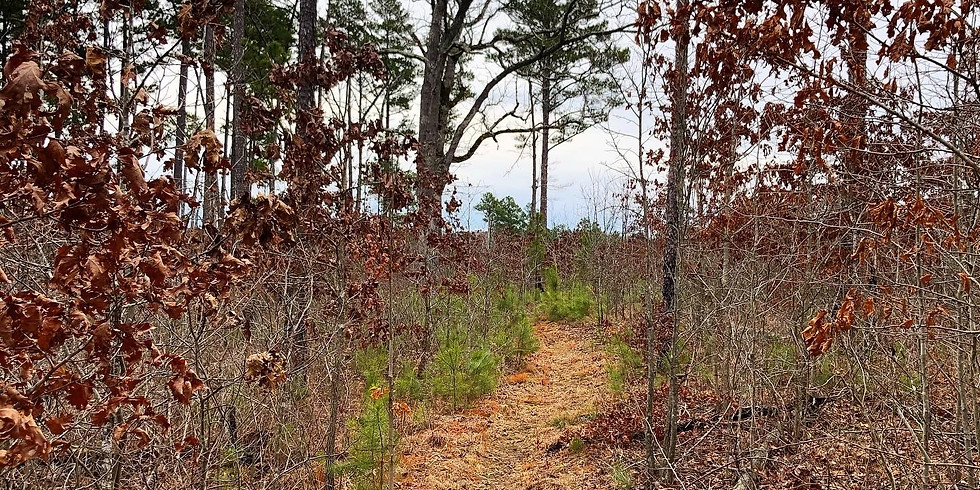 University Forest Conservation Area Trail Workday