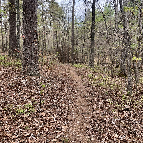 Clear trail 2.jpg