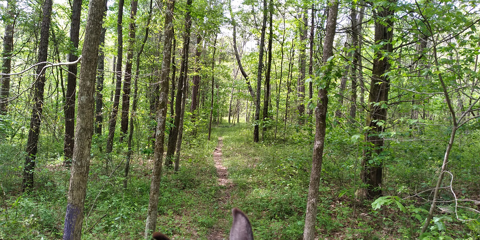 Victory Horse Trail Workday