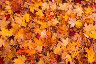 dry-autumn-leaves