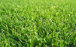 Grass Wallpapers 5.jpg