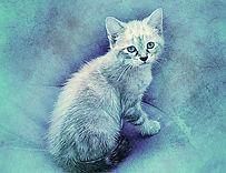 cat-2519188_640.jpg