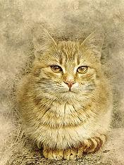 cat-2343436_640.jpg