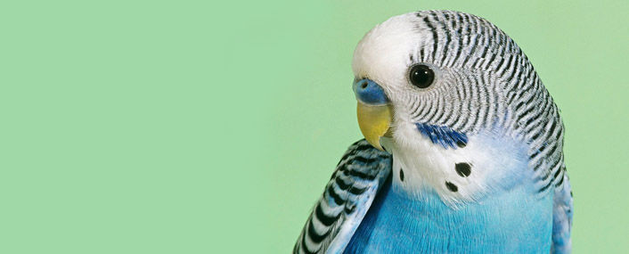 ковер птицы.jpg