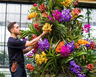 Kew Garden. Le festival des orchidées est de retour: la magnifique biodiversité de l'Indonésie.