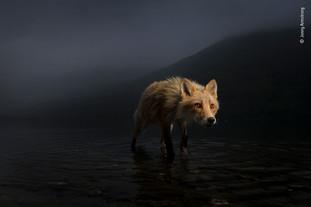Art Londres. Wildlife Photographer of the Year. Une planète sous pression.
