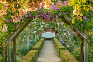 Les jardin fleuris du Mottisfont's Rose Garden au National Trust.
